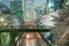 在Meguro河的佐仓开花 免版税图库摄影