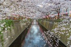 在Meguro河的美丽的樱花佐仓在东京日本 免版税库存图片