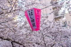 在Meguro河,东京,日本的樱花节日 库存照片