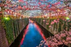 在Meguro运河的樱花在东京,日本 免版税库存照片