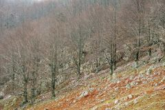 在Mehedinti山的美好的风景在秋天 库存照片