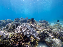 在Menjangan海岛01的惊人的礁石上面 库存图片