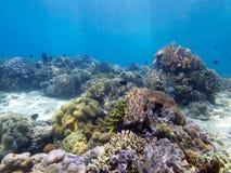在Menjangan海岛03的惊人的礁石上面 库存图片