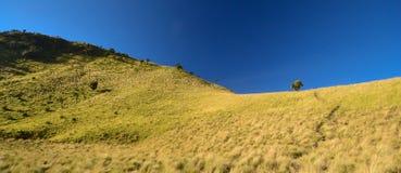 在Merbabu山,中爪哇省,Java,印度尼西亚,亚洲的美丽的绿色大草原 库存图片