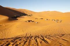 在Merzouga沙丘-摩洛哥的巴巴里人帐篷 图库摄影