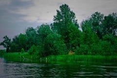 在Michigan湖2的芦苇 免版税库存照片