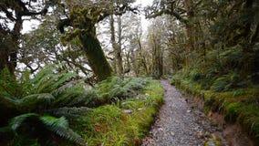 在Milford Sound,新西兰的关键山顶轨道 影视素材