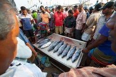 在Mirissa的鱼市 库存图片