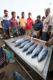 在Mirissa的鱼市 免版税库存图片