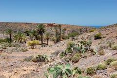 在Mirleft -摩洛哥的路上 库存图片