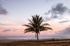 在moirning的椰子 免版税库存图片
