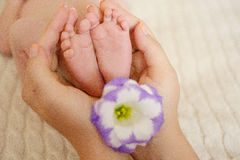 在mom& x27的婴孩脚; 有花和被弄脏的背景的s手 免版税库存图片