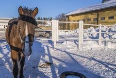 在Momarken的马 免版税库存照片