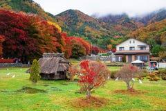在Momiji隧道, Kawaguchiko的秋天颜色 库存照片
