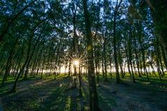 在Mont Choisy海滩毛里求斯的Filao树 免版税库存照片