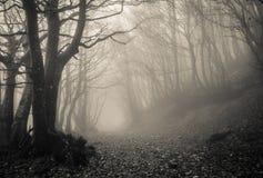 在Monte Catria,马尔什哥特式森林的道路  免版税图库摄影
