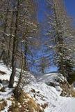 在Monte Lussari的斯诺伊树 免版税库存照片