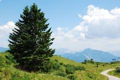 在Monte Zoncolan的风景 免版税库存照片