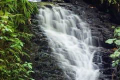 在monteverde云彩森林储备的小瀑布 库存图片
