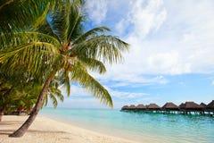 在Moorea的理想的海滩 免版税库存照片