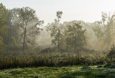 在morningdust的风景 免版税库存图片