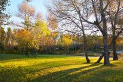 在morningtide风景的树 库存图片