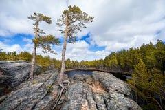 在Mountain湖的美丽的杉树 免版税库存图片