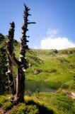 在Mountain湖的边缘的死的树 免版税库存照片