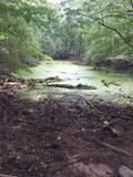 在mountians的沼泽 库存照片