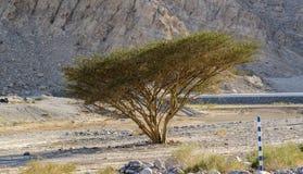 在moutain的树 免版税图库摄影