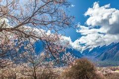 在moutains前面的美丽和五颜六色的桃子开花 免版税图库摄影