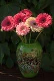 在mozaic murano玻璃做的绿色花瓶的大丁草雏菊 库存照片