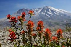 在Mt圣Helens的油漆刷 免版税库存图片