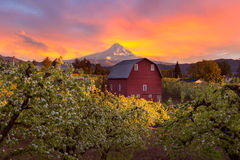 在Mt敞篷和红色谷仓的日落在波特兰俄勒冈 免版税库存图片
