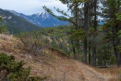 在Mt的供徒步旅行的小道 在BC Invermere附近的斯旺西 免版税库存图片