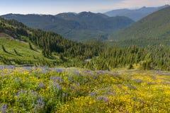 在Mt的野花 噬菌体 免版税库存照片