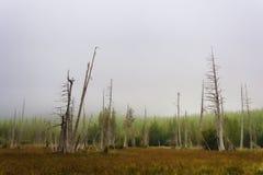 在Mt附近复制沼泽地草甸空间  Mt.圣Helens 免版税库存图片