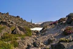 在Mt. St. Helens的野花 免版税库存图片
