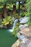 在Mt Tomah的瀑布 免版税库存图片