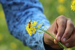 在muaterd花的一个大黄蜂 库存图片