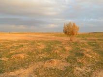 在Muborak,乌兹别克斯坦附近的日落 2014年4月12日 图库摄影