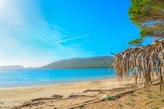 在Mugoni海滩的棕榈遮阳伞 免版税库存图片