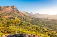 在Munnar自然 免版税图库摄影