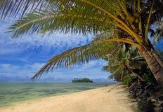 在Muri盐水湖使可可椰子树环境美化看法在Rarotong 库存照片