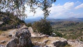 在mykenae的橄榄 库存图片