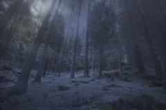 在mysty森林的升起的月亮 库存照片