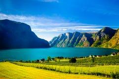 在Naeroyfjord Aurlandsfjord海湾风景的看法在挪威 免版税图库摄影