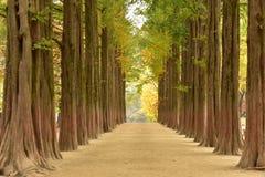 在nami海岛韩国的秋天 免版税库存图片
