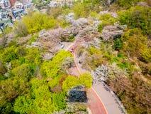 在Namsan公园夏季的樱花佐仓,汉城,韩国 免版税库存照片