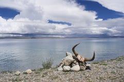 在Namtso湖的牦牛头骨 免版税库存图片